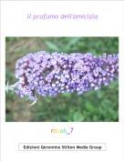 rosa6_7 - il profumo dell'amicizia